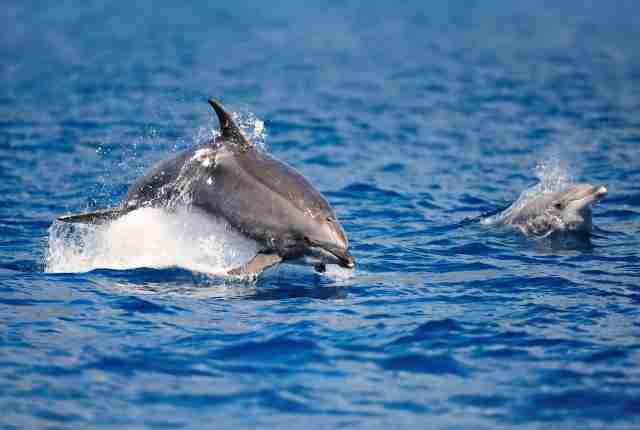 Bewusst reisen nach: Walbeobachtung Azoren